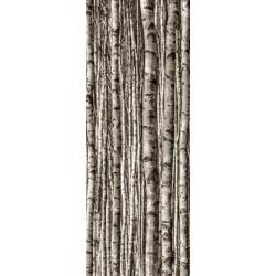 Birch 4*898x598 (898x2398) mm